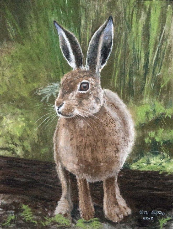 Robin The Hare
